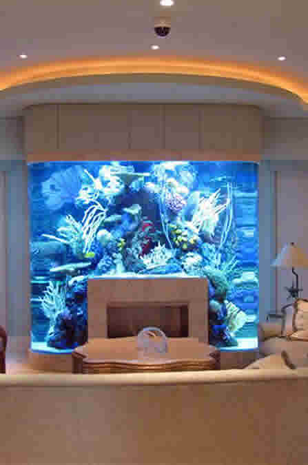 Custom Built Aquariums